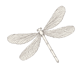 Photo: dragonfly