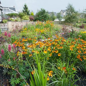 Holme: hot colour planting