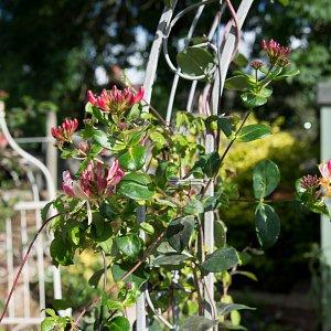 Garden Design Kendal garden design cumbria: buzy lizzie garden design penrith cumbria
